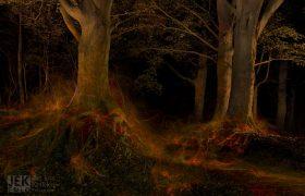 Lava woud